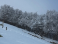 Beauregard - Montagne du Conest 028