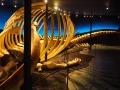Visite du superbe musée de la baleine à Husavik