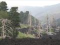 Sur les pentes de l'Etna, les arbres eux aussi ont eu chaud !