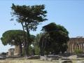 Tout à coté du camping se trouve le splendide site archéologique de Paestum