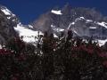09552 - Face sud de la meije par la Chevauchée des Vachesquiripent.jpg
